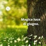 magica luce di giugno